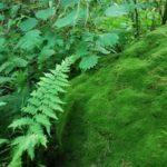 庭の苔対策と駆除・除去方法を紹介!これで苔とはサヨナラです!