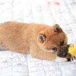 犬がカーペットをなめる理由とは?止めさせるにはどうする?