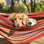 愛犬の日が5月13日になった由来とは?英語では何ていうの?