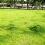 中野区で日焼け天サロなら中野セントラルパークでしょ!